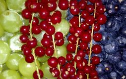 Free Three Fruits Stock Photos - 84601083