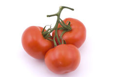 Three full red tomatoes on a branch. Isolated on white Royalty Free Stock Image