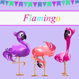 Three funny Flamingo on a pink background Stock Photos