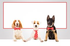 Three funny office dogs. On the background of a big banner royalty free stock images