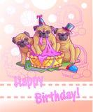 Three funny pugs Royalty Free Stock Image