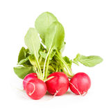Three garden radish Royalty Free Stock Photography