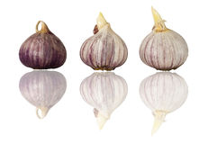 Three garlic bulbs in a row Royalty Free Stock Images