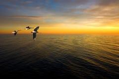 Three geese Stock Image