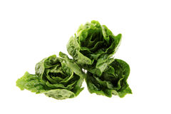 Three gem lettuce. Stock Images