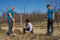 Three generations family planting a tree together Stock Photography