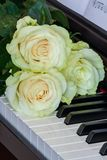 Three gently white-green roses on piano keys Stock Images