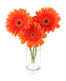 Three gerbera flowers in glass Royalty Free Stock Photo