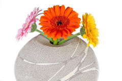 Three Gerbera flowers in a vase Stock Image