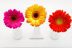 Three Gerbera flowers in vase on white wooden table. Daisy flower in vase. royalty free stock images