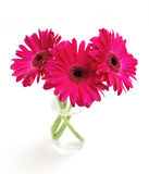 Three gerbera in a glass Stock Images