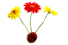 Three gerbera in the vase. Isolated over white Royalty Free Stock Photography
