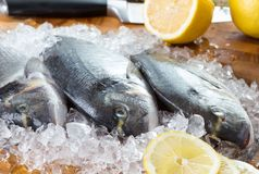 Three gilt-head fish. And lemonon with ice on wooden plate stock photos