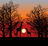 Three Giraffes in the Sunset in Africa vector illustration