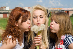 The three girls blow away dandelion Stock Photos