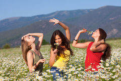Three Girls on the flower meadow Stock Image
