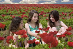 Three girls in a red field. Of Popey Anemon flowers Royalty Free Stock Image