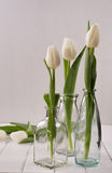 Three glass bottles with tulips Stock Photography
