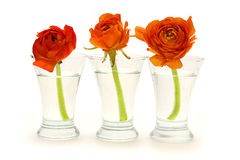 Three glass vases with orange flowers Royalty Free Stock Photos