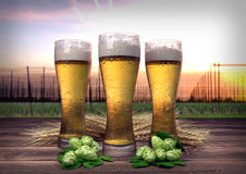 Three glasses of beer with hop-garden background - 3D render Stock Photography