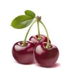 Three glossy wild cherries isolated on white background Royalty Free Stock Photo
