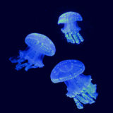Three Glowing Jellyfish. Three blue jellyfish with glowing green algae spots. Symbiotic relationship: algae provides nutrients, while jellyfish rise to the royalty free stock images