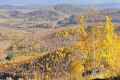 Three golden birchs on edge of the mountaintop Stock Photos