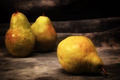 Three golden brown bosc pears on gray studio backdrop stock photo