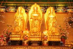 Three golden buddha Royalty Free Stock Photo