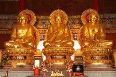 Three golden buddha Stock Photography