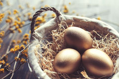 Three golden eggs in a basket filled with straw. And some yellow floral branches in the backgorund stock photo