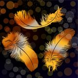 Three golden feathers Royalty Free Stock Photography