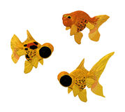 Three golden fish. Three golden carps on white background Stock Photos