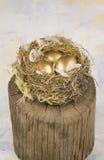 Three golden nest eggs Royalty Free Stock Image