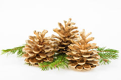Three Golden pine cone with conifer Royalty Free Stock Photos