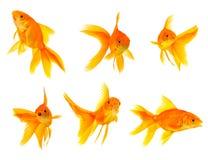 Three goldfishes Royalty Free Stock Image