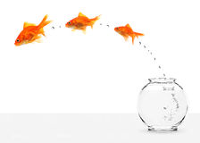 Three goldfishes escaping from fishbowl Stock Photography