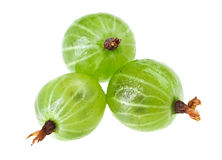 Three gooseberry fruits Stock Images