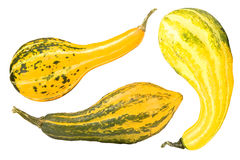 Three gourds Royalty Free Stock Photos