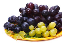 Three grape Royalty Free Stock Images