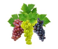 Three grapes with leaves Stock Image