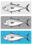Bluefin-tuna Royalty Free Stock Images