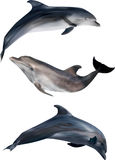 Three gray dolphins isolated on white Stock Image