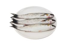 Three gray mullet fish on plate Royalty Free Stock Images