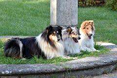 Three grazias in a row stock photos
