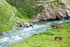 Three grazing horses Stock Photography