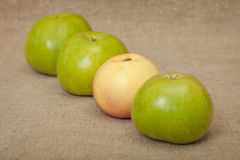 Three green apples and one yellow Stock Photos