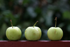 Three green apples Royalty Free Stock Image