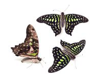 Three green butterflies on a white background. Isolated. stock image