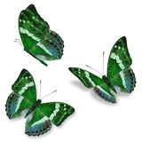Three green butterfly Stock Photos